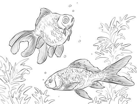 Black Moor And Shubunkin Goldfishes  coloring page