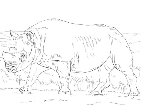 Black Rhinoceros coloring page