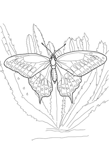 Black Swallowtail coloring page