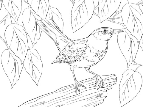 Blackbird Male coloring page