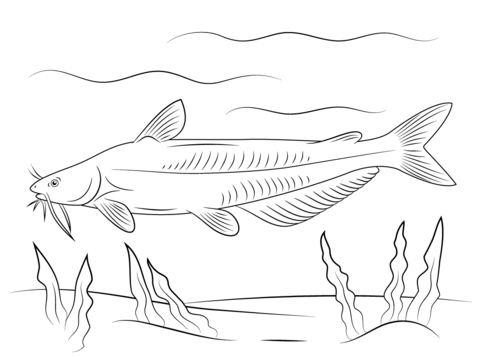 Blue Catfish coloring page