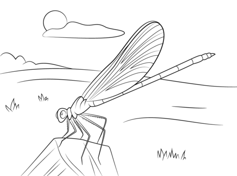Blue Damselfly coloring page