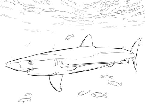 Blue Shark with Pilot Fishes coloring page