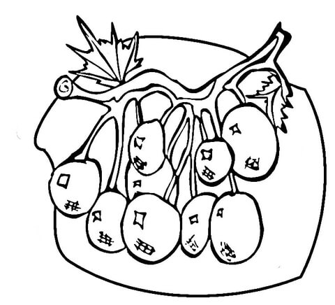 Blueberries  coloring page