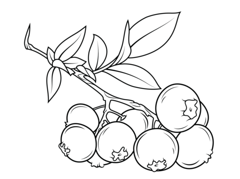 Blueberry branch coloring page