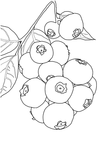 Blueberry Bush coloring page