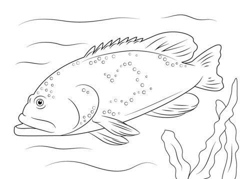 Bluespotted Grouper coloring page