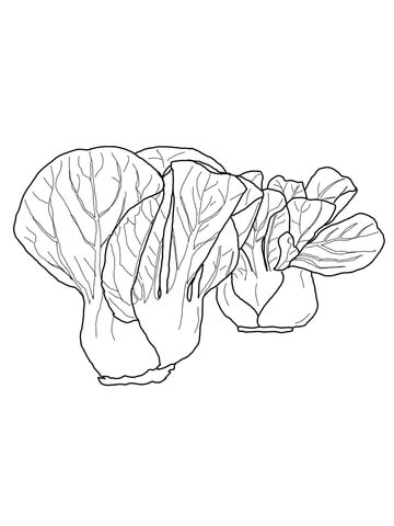 Bok Choy coloring page