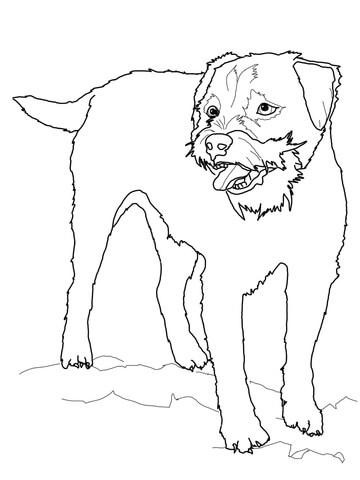 Border Terrier coloring page
