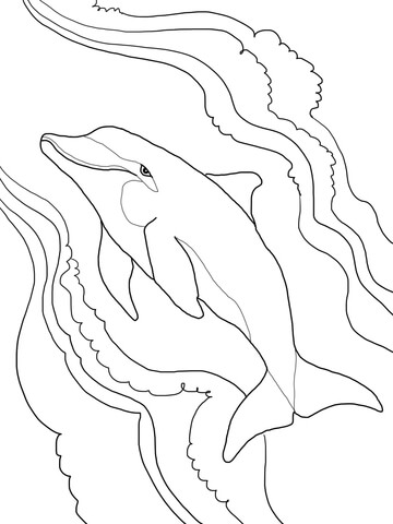 Bottlenose Dolphin coloring page