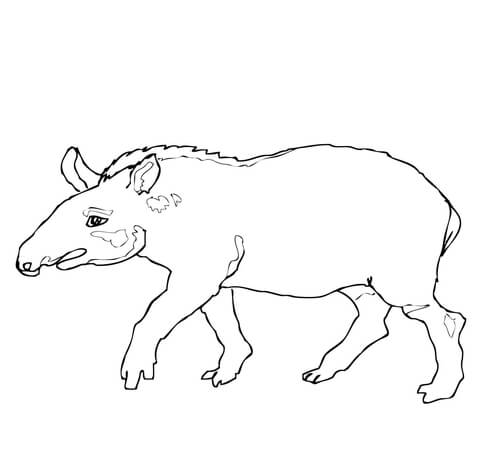 african civet coloring page brazilian tapir coloring page