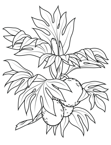 Breadfruit branch coloring page