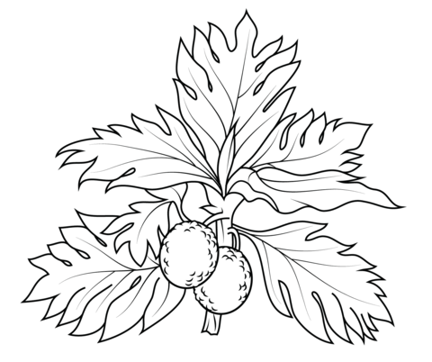 Breadfruit coloring page