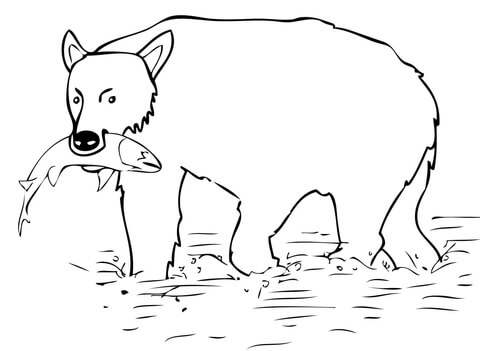 Brown Bear Catch the Salmon coloring page