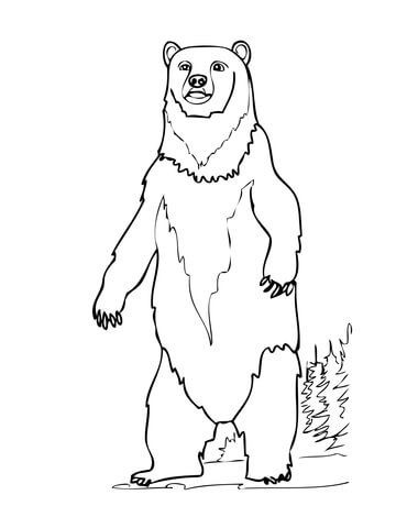 Brown Bear Standing up coloring page