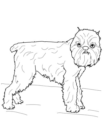 Brussels Griffon coloring page