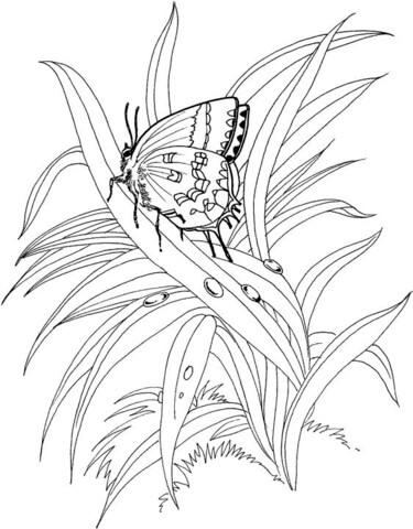 Butterfly Is Standing On The Plant coloring page