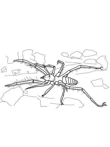 Camel Spider coloring page - Free Printable Coloring Pages