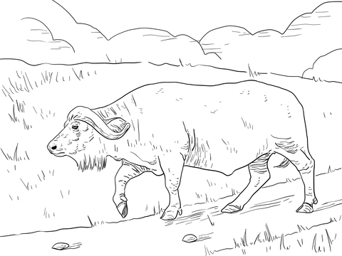 Cape Buffalo coloring page