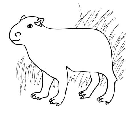 Capybara from South America coloring page