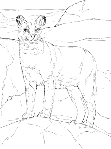 Caracal coloring page