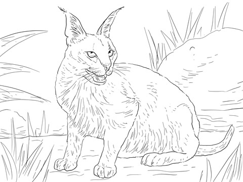 Caracal Desert Wild Cat coloring page