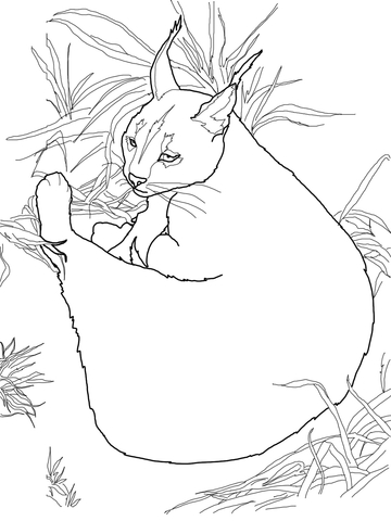Caracal Wild Cat coloring page