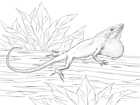 Carolina Anole coloring page