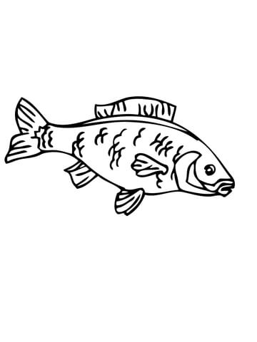 Carp coloring page