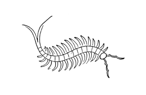 Centipede coloring page
