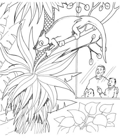 Chameleon In Zoo coloring page