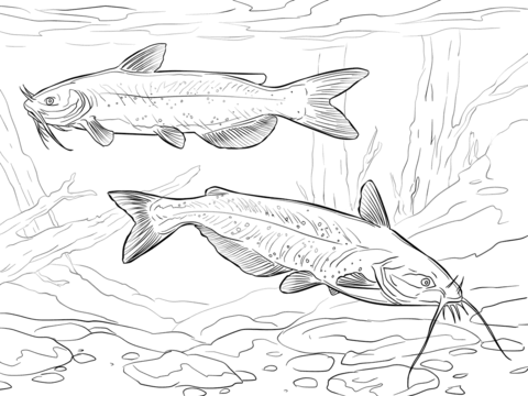 Channel Catfishes coloring page