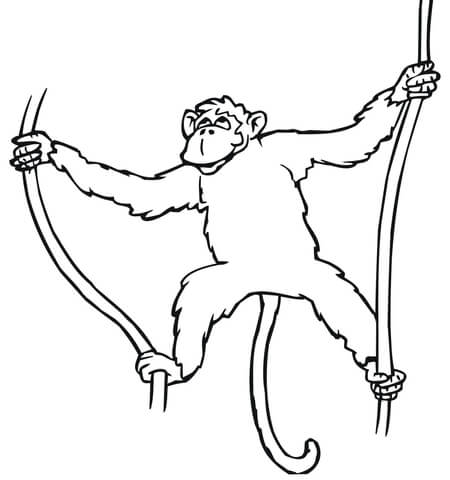 Monkey Hanging on Liana coloring page