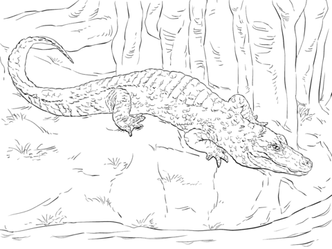 Chinese Alligator coloring page - Free Printable Coloring Pages