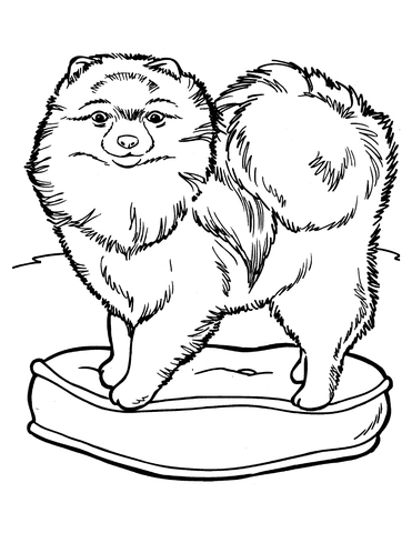 Chow Chow dog coloring page