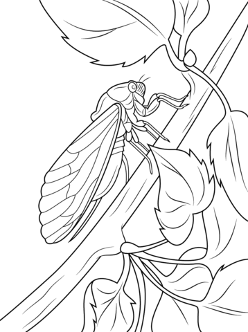 Cicada sits on tree stem coloring page