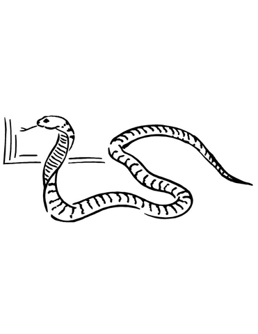 Cobra snake coloring page