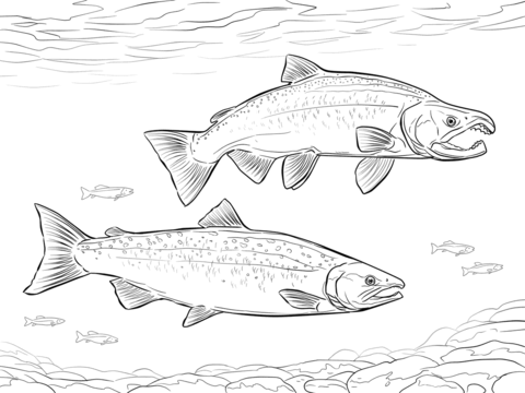 Coho Salmon coloring page