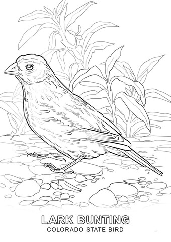 Colorado State Bird coloring page