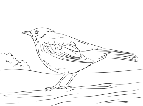 Common Blackbird coloring page