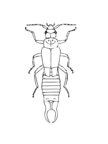 Common Earwig coloring page