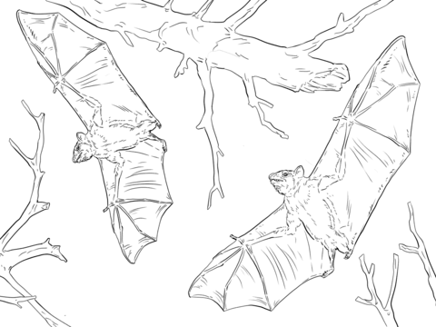 Common Fruit Bats coloring page