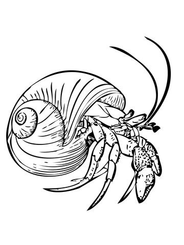 Common Hermit Crab or Soldier Crab coloring page