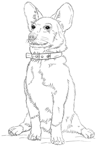 Corgi Dog coloring page