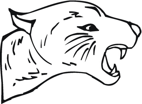 Cougar Face Coloring Page Free Printable Coloring Pages