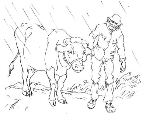 Cow with a Man coloring page