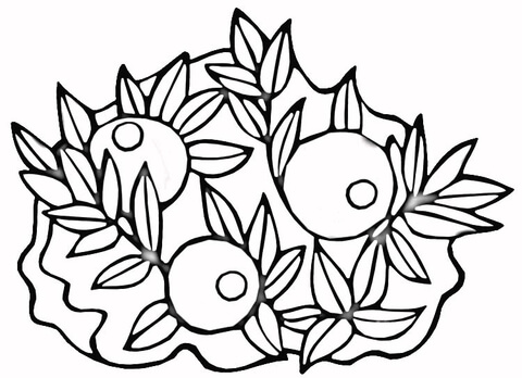 Cranberries  coloring page