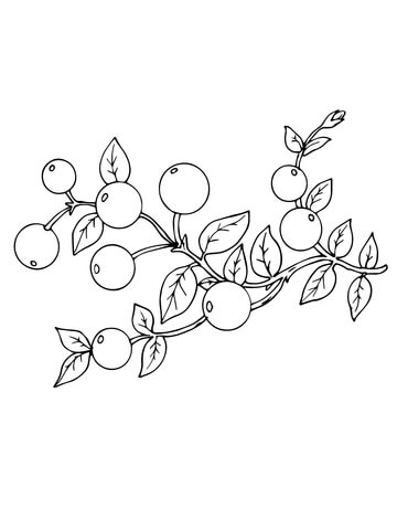 Cranberry coloring page
