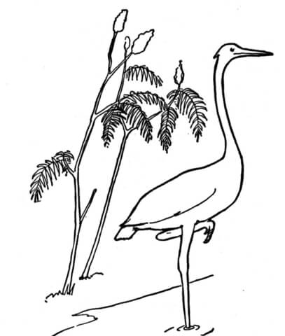 Crane Standing on One Leg coloring page