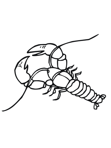 Crayfish Coloring Page Free Printable Coloring Pages